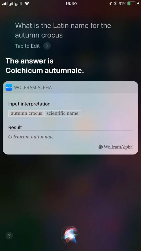 Siri scores better in this piece of trivia